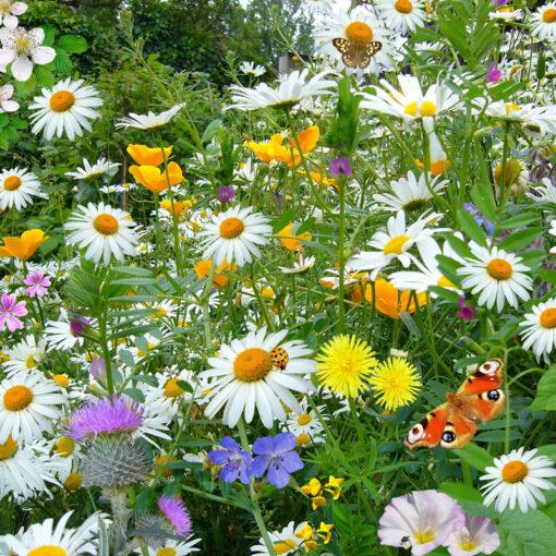 wild_flowers_wild_plants_nature-jubilee