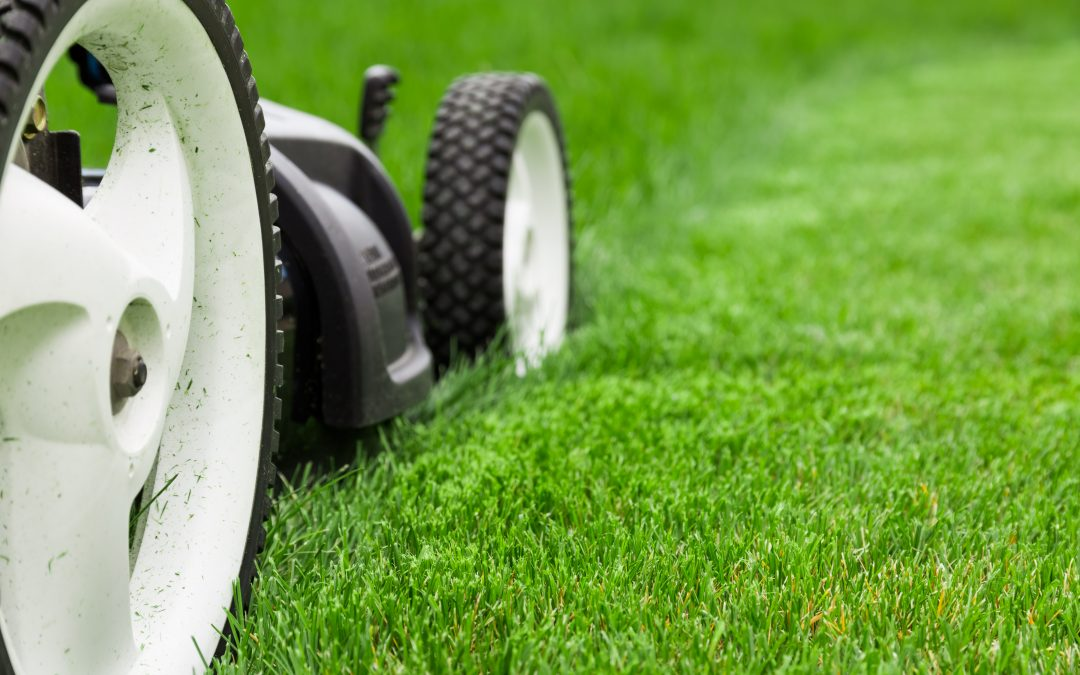 Is turf the only solution for early season grass coverage?